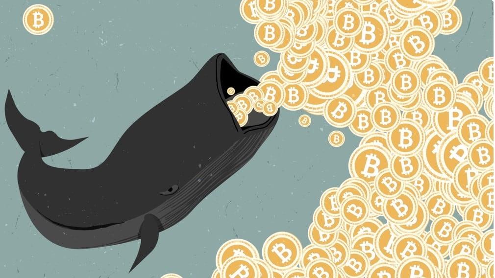 Baleias de criptomoedas ou grandes investidores