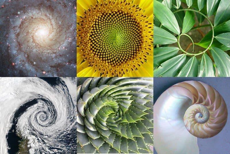 Fibonacci na natureza